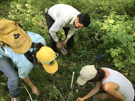 TSara, Noah, and Eli taking samples to study the combined impacts of logging and Japanese Stiltgrass invasion on carbon cycling