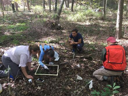 Teamwork to harvest 3 long-running experiments on the impacts of an invasive grass