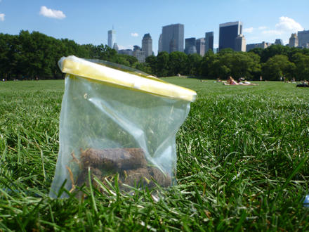 Soil samples taken in Central Park (NYC) shown in a plastic bag with buildings in the background